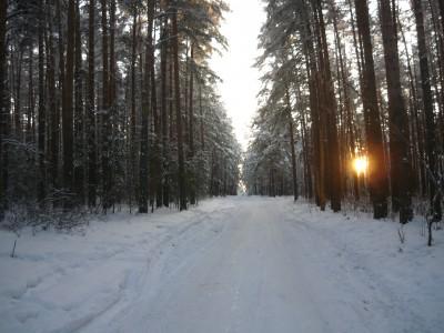 Une forêt à Tcheliabinsk